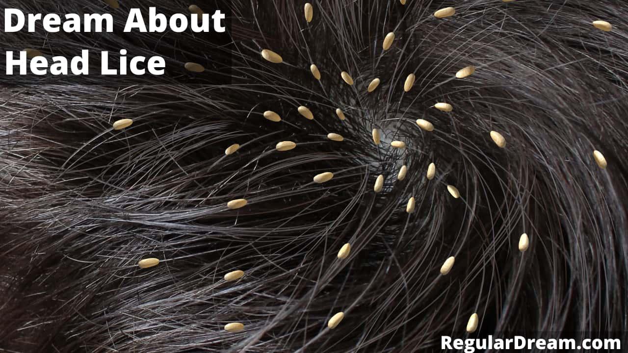 Dream about head lice- Meaning, interpretation & symbolism