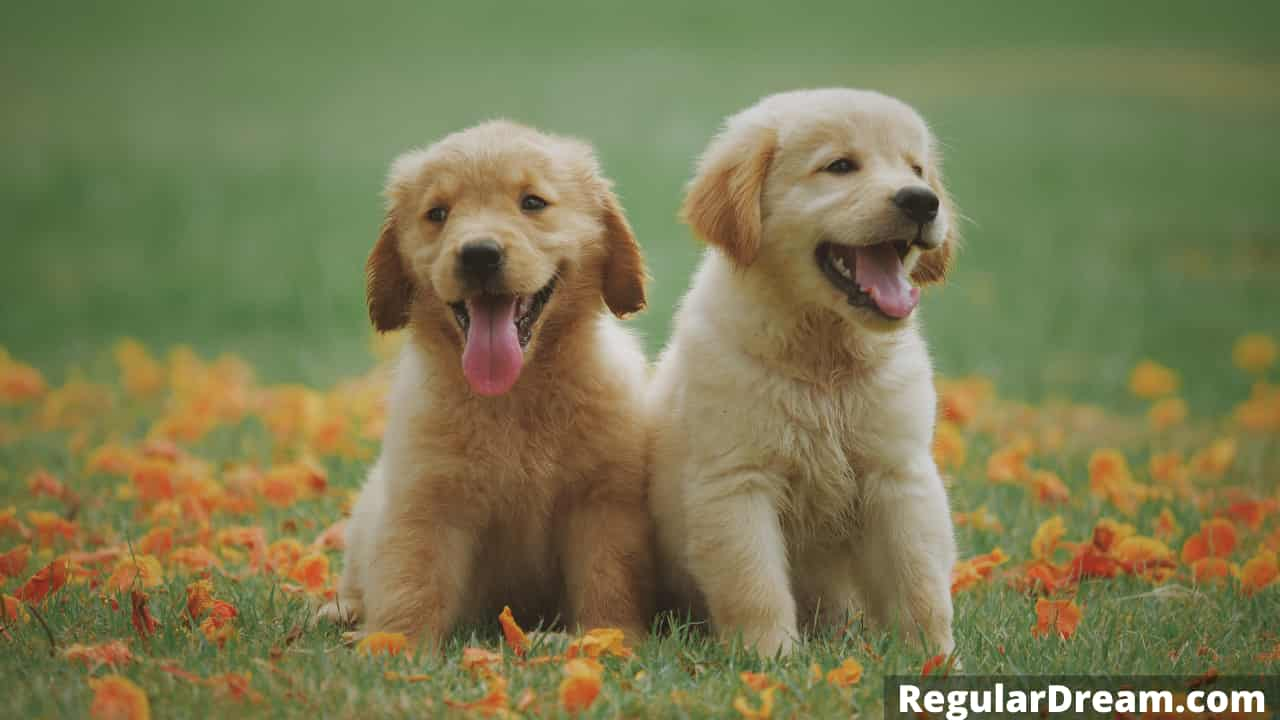 Dream about puppies - Meaning of puppies dream