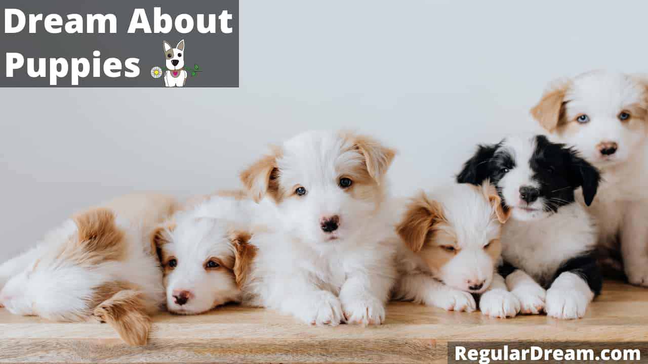 Puppies in dream - Meaning, interpretation and Symbol