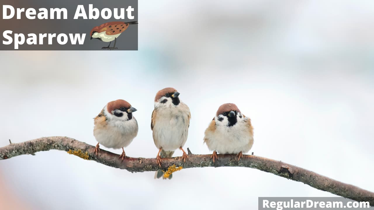 Sparrow Dream - Meaning, Interpretation and symblism - What do sparrow in dream means