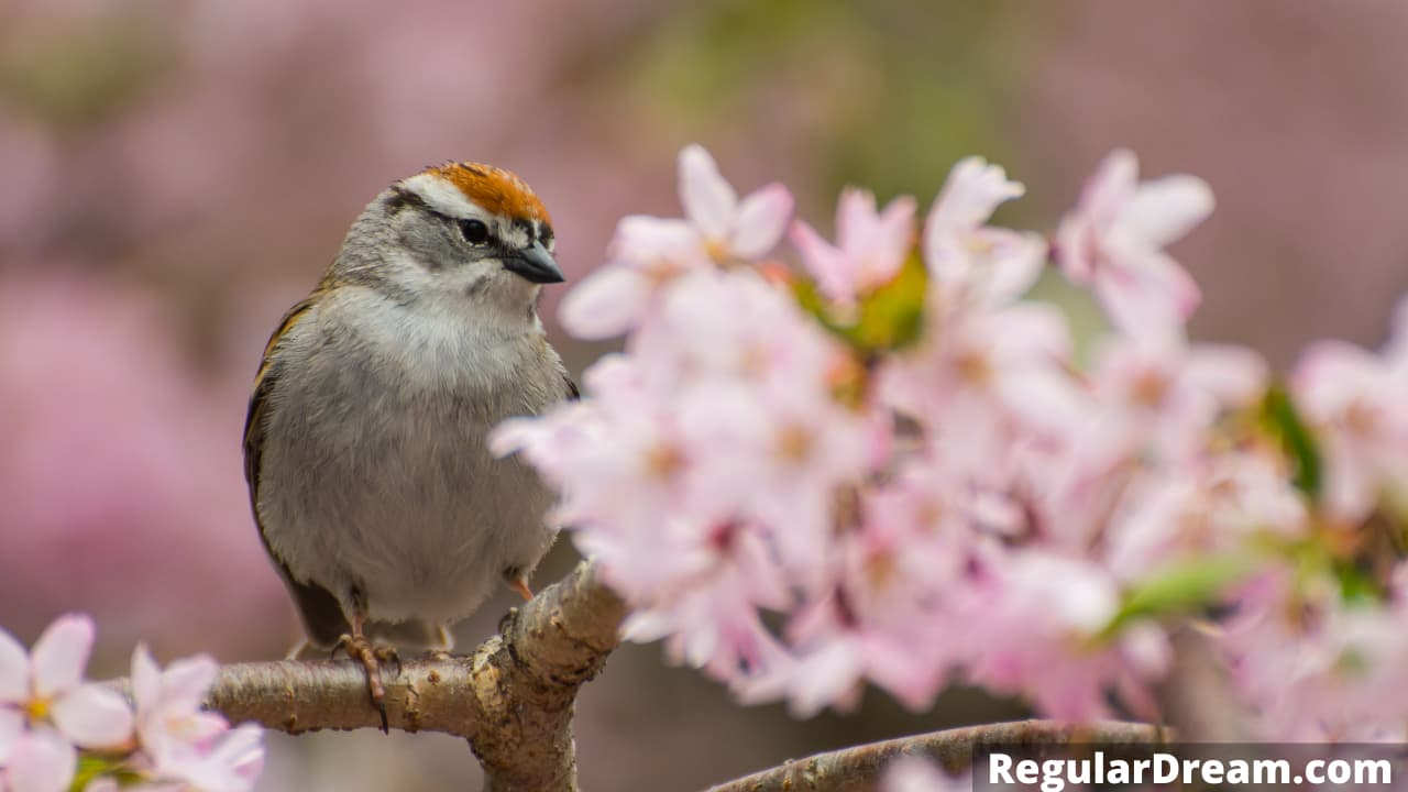 Sparrow in dream - Meaning, interpretation and symbol