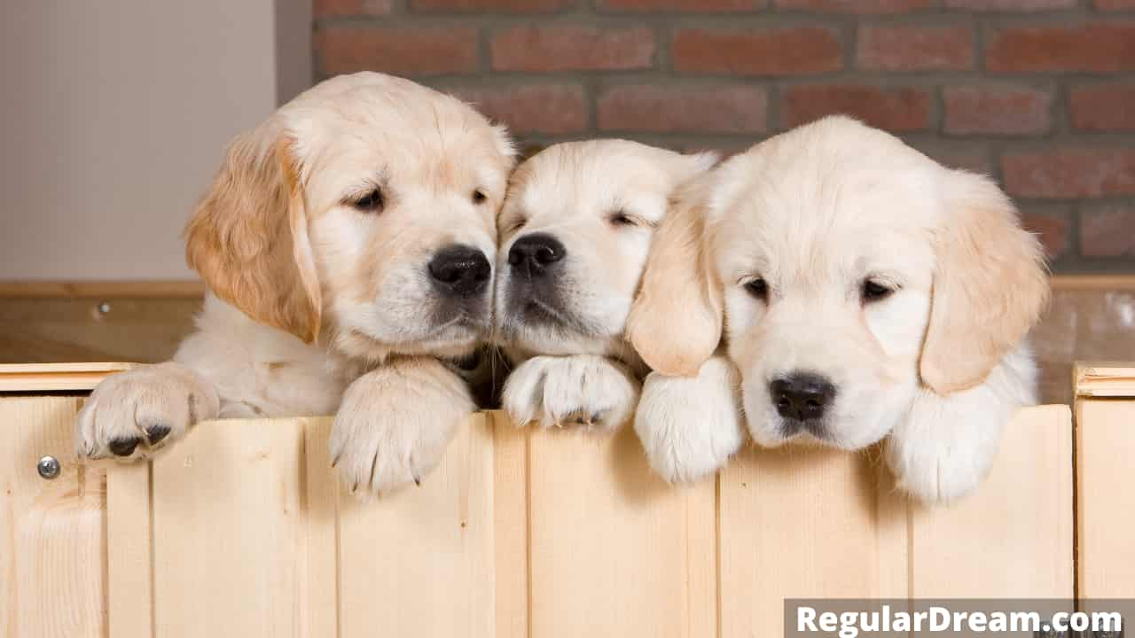 What does dream about puppies mean -Dream meaning and interpretation