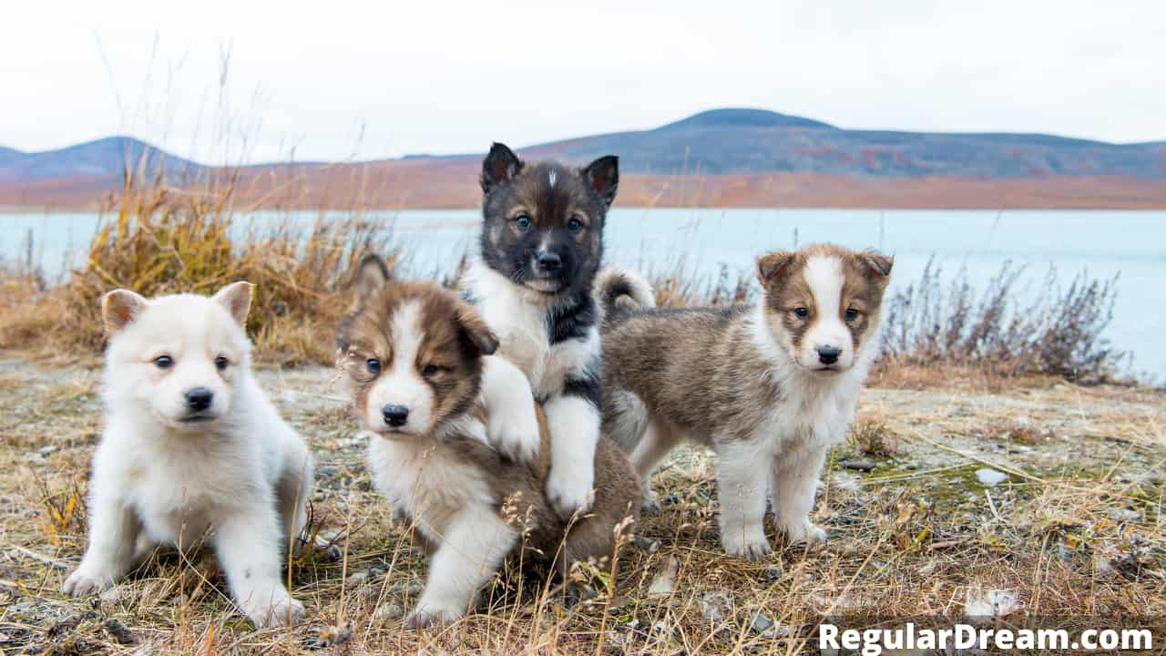 Why do I keep dreaming about puppies? Puppies in dream meaning and interpretation