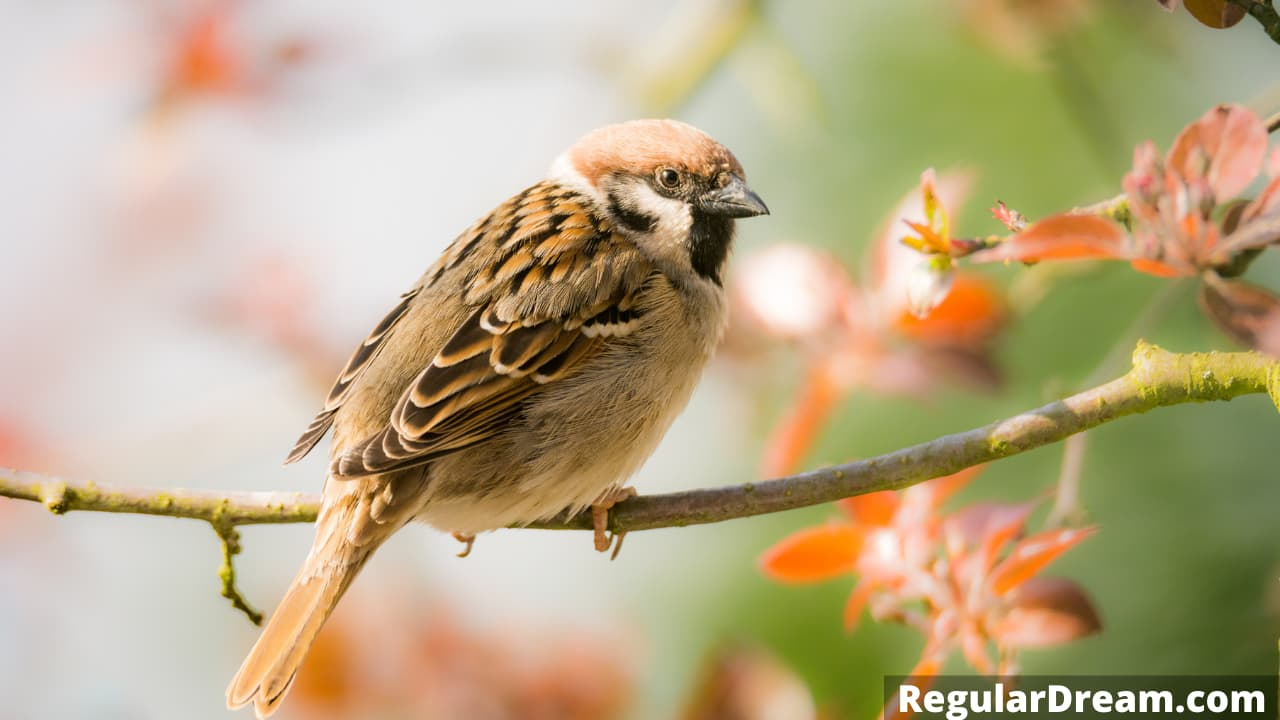Why do I keep dreaming about sparrow - Sparrow dream meaning and interpretation
