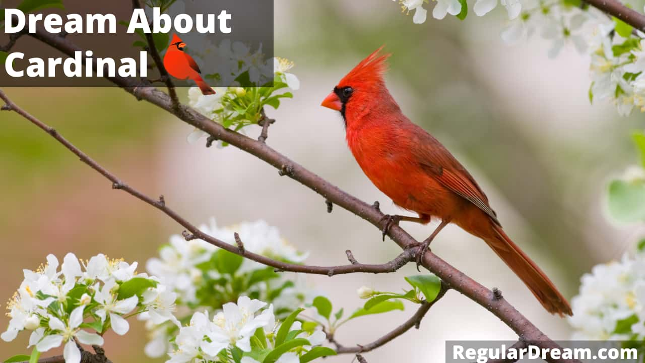 Dream about Cardinal - What does such dream means?