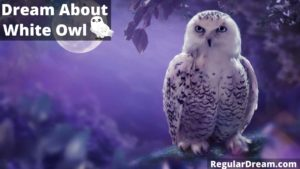 Dream about White Owl- What does such dream means?