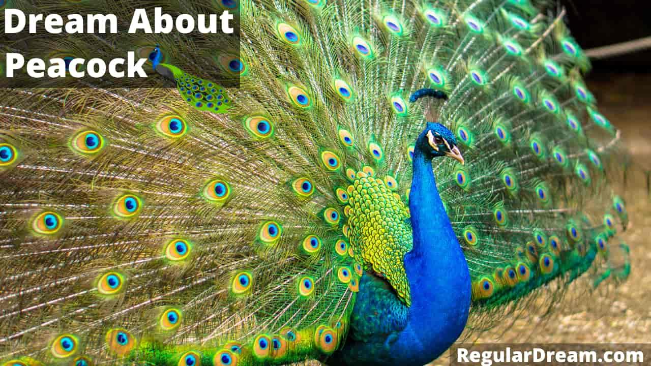 Peacock Dream Meaning, Interpretation and symbol - Regular Dream